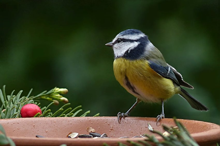 what to feed birds in the winter