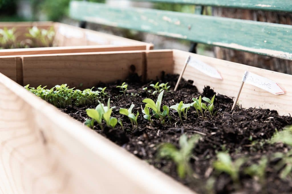 what vegetable seeds to grow in March in the UK