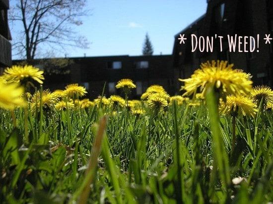 bee gardening tips