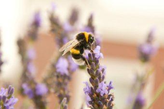 bee sugar solution