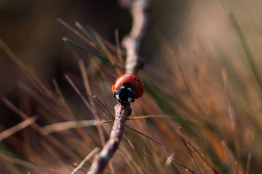 how to help ladybirds