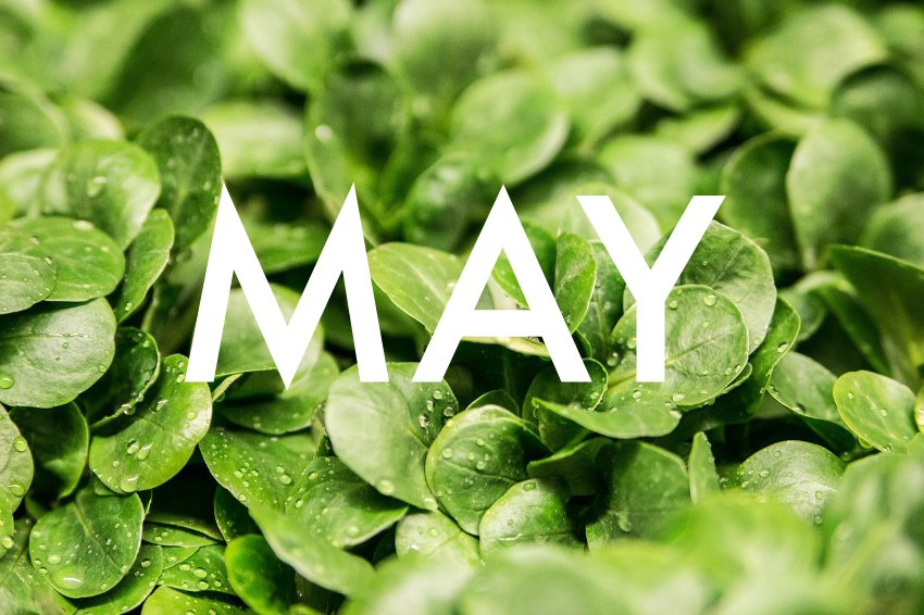 fruit and vegetables in season in May