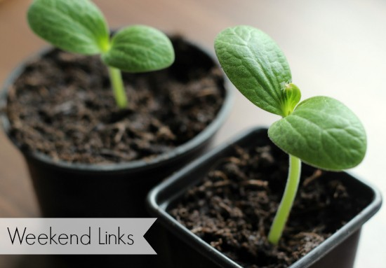 grow your own blog