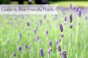 bee friendly garden plants