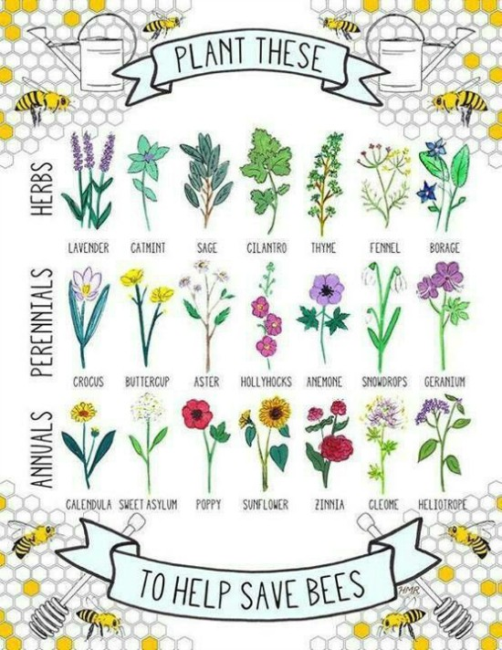 bee-friendly flowers