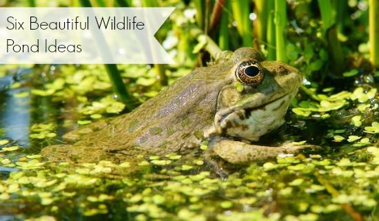 Home moral fibres uk eco green blog for Wildlife pond design uk