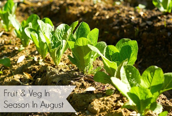 what's in season in August
