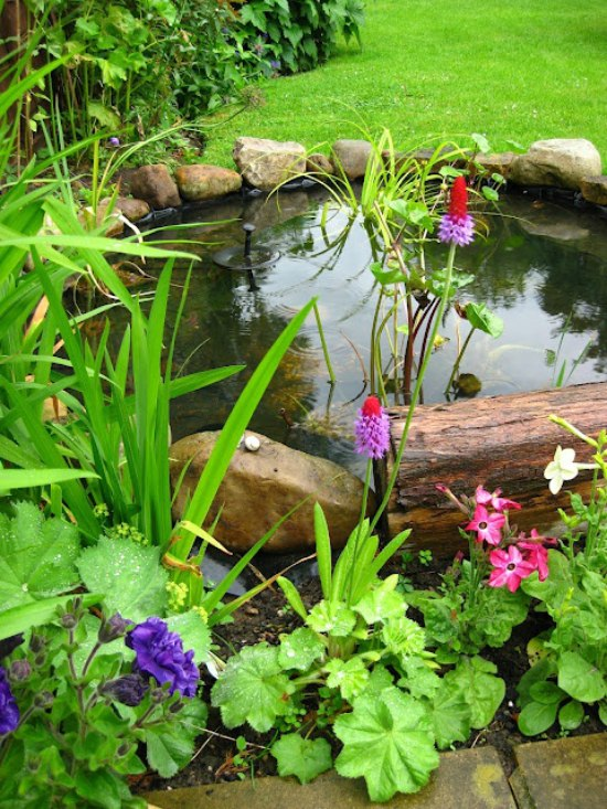 Wildlife Pond Ideas - Six Beautiful Examples | Moral ... on Small Garden Ponds Ideas id=39404