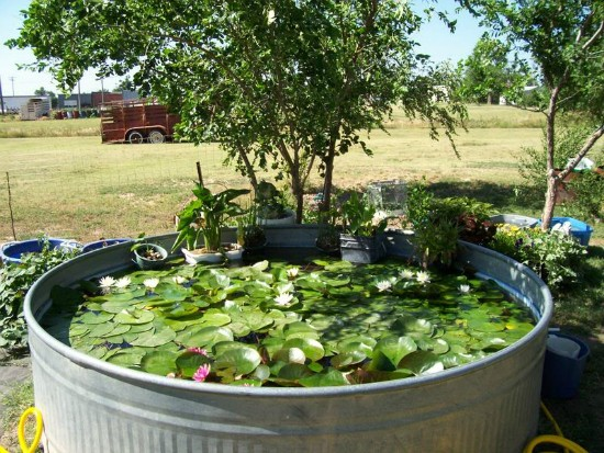 Metal Container Pond Moral Fibres Uk Eco Green Blog