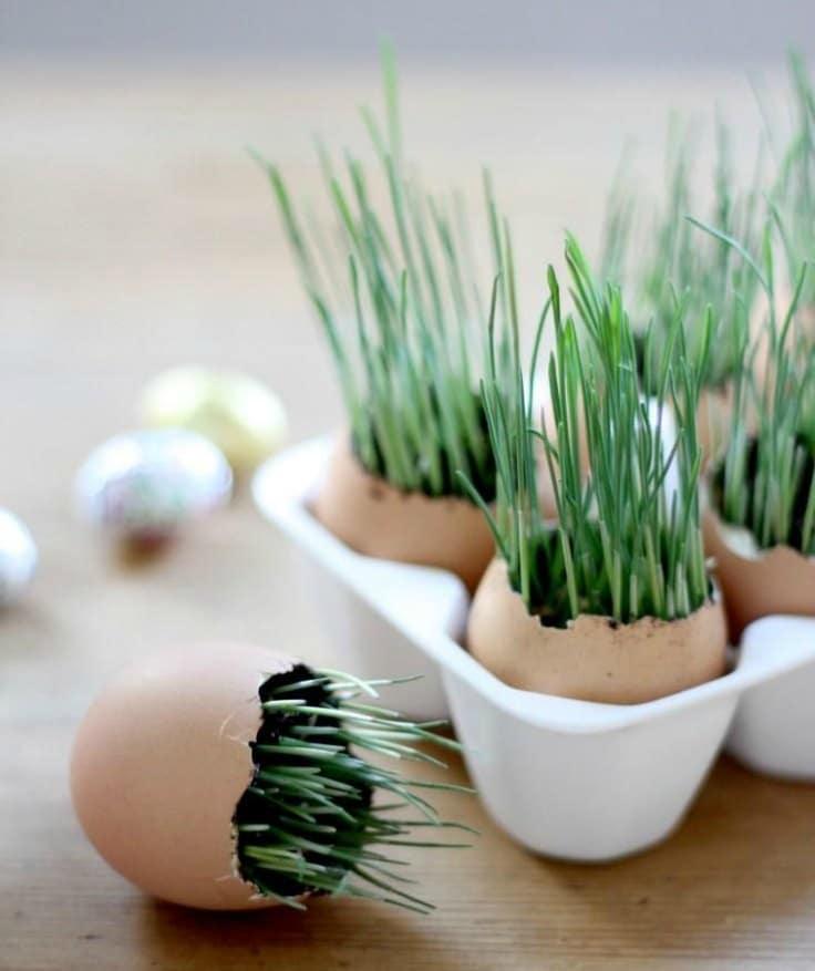 grow seeds in eggshells