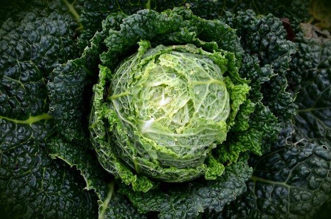 vegetables in season in february