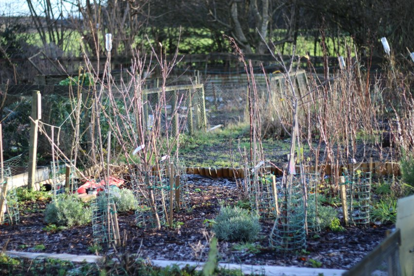 books for allotments