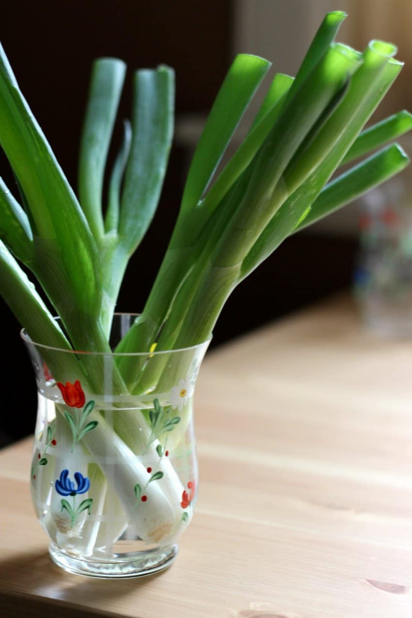 how to store spring onions