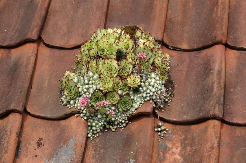 green roof ideas