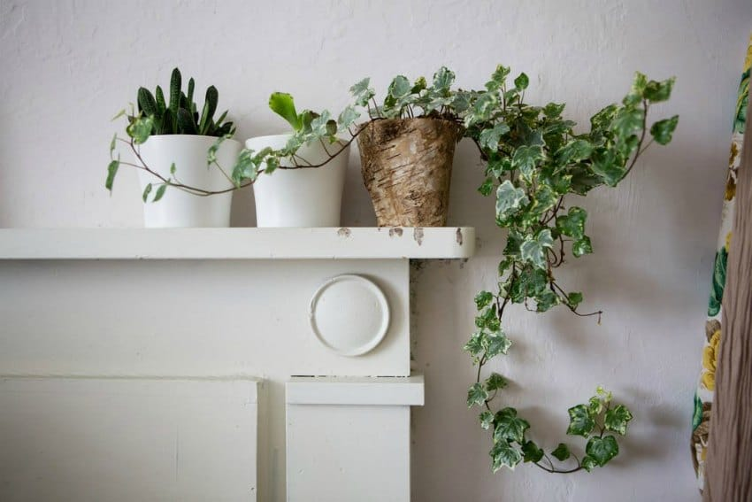 plant details in north yorkshire house tour