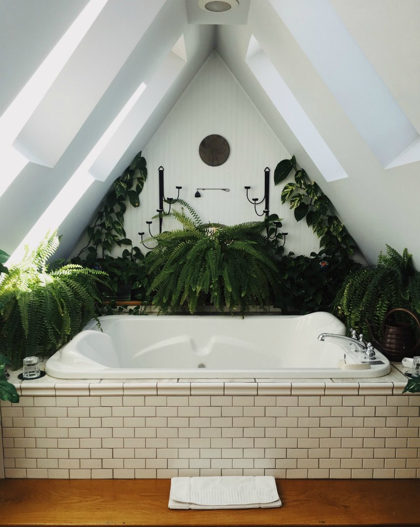 bath with plants