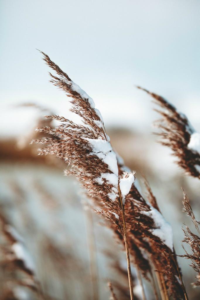 winter blog reading