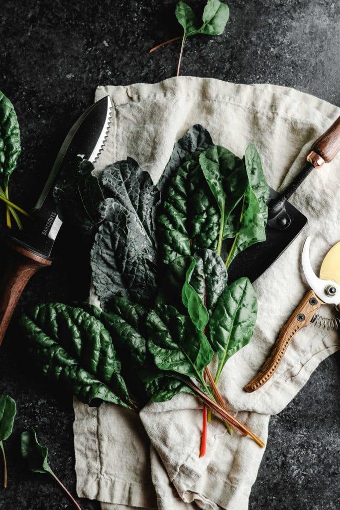gardening tips for renters