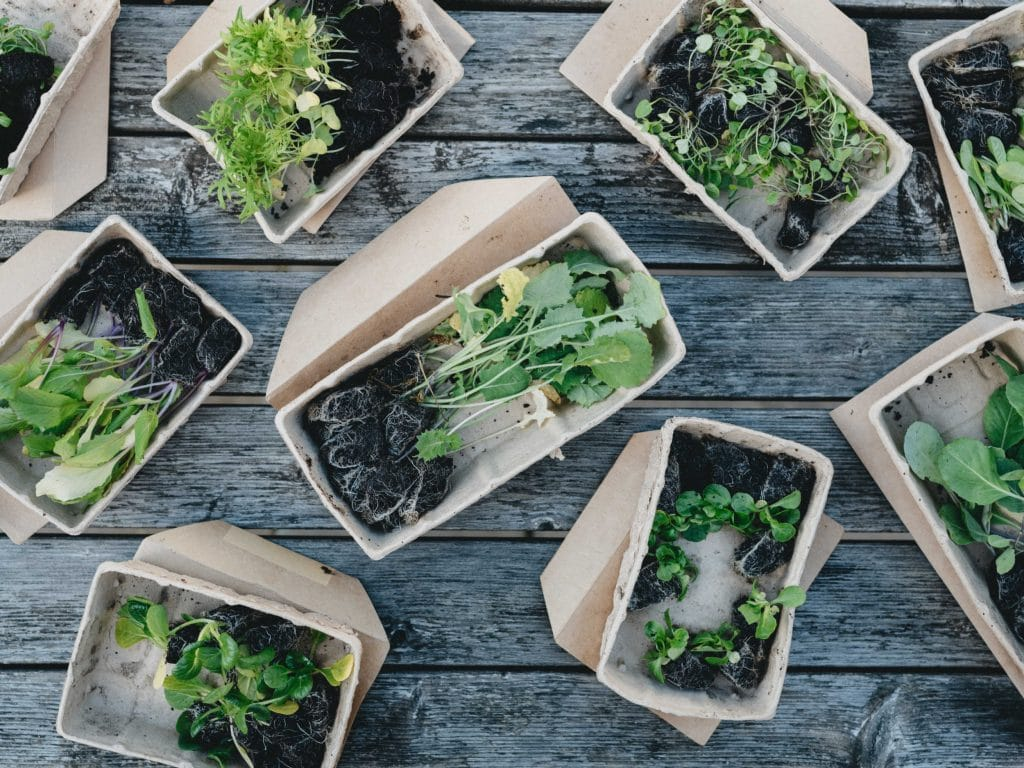 biodegradable or compostable