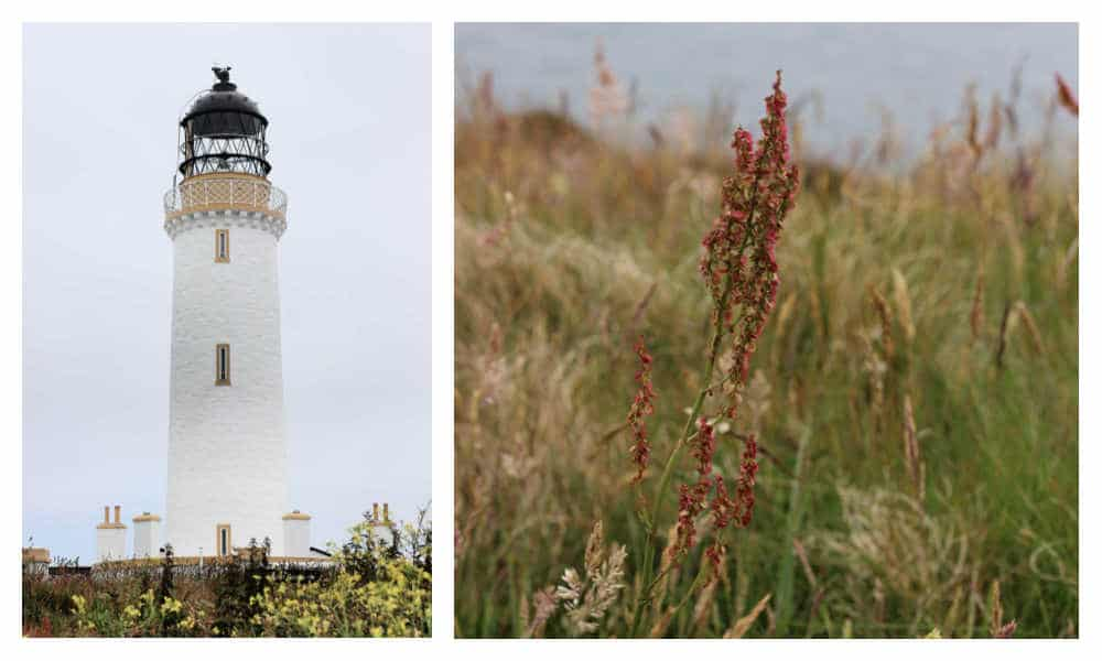 Mull of Galloway lighthouse and nature reserve